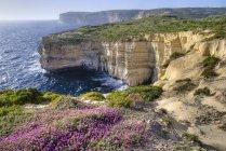 Acantilados a lo largo de océano con flores silvestres - foto de stock