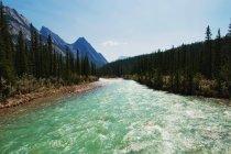 Siffleur речной воды — стоковое фото