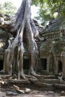 Arbre racines couvrant Temple — Photo de stock