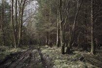 Percorso attraverso boschi — Foto stock