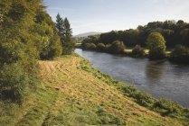 Деревья вдоль берега реки Нор — стоковое фото