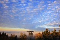 Salida del sol a través de la niebla de la mañana - foto de stock
