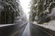 Strada attraverso la foresta in inverno — Foto stock