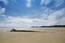 Une longue plage avec bois flotté dans la côte du Pacifique — Photo de stock