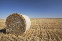 Hay Bale In Cut Field — Stock Photo