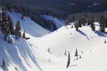 Орегон каскадів, Орегон — стокове фото