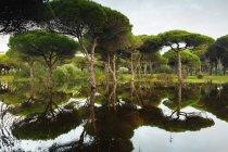 Затопленный лес с водой — стоковое фото