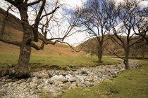 Water Stream Along Rock — Stock Photo