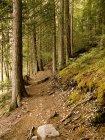 Waldweg, Pfeifer, britische Kolumbia — Stockfoto