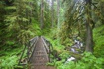 Trail und Creek In üppigen Wald — Stockfoto