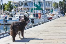 Dog Standing On Pier — Stock Photo