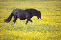 Horse Walking In Field — Stock Photo