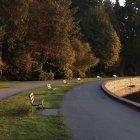 Лавки вздовж дамбу в парк Стенлі — стокове фото