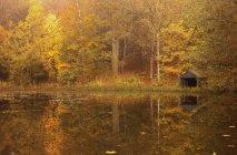 Alberi lungo l'acqua In autunno — Foto stock