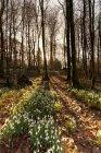 Fiori bianchi che cresce sul piano — Foto stock