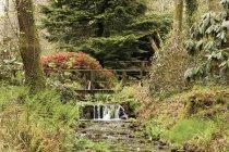 En bois Bridge Over Stream dans le Parc National de Dartmoor — Photo de stock