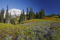 Wildflowers And Trees With Mount Rainier — Stock Photo