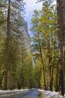 Treelined Rural Road — Stock Photo