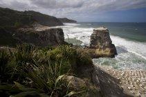 A Gannet Colony, Muriwai Beach, Nouvelle-Zélande — Photo de stock