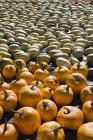 Squash e abóboras deitado — Fotografia de Stock