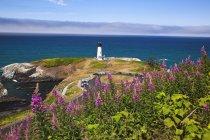 Flores silvestres no topo do penhasco — Fotografia de Stock