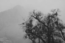 Tree And Mountain In The Fog — Stock Photo