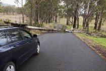 Árbol ha caído a través de carretera - foto de stock