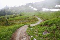 Brouillard le long sentier — Photo de stock