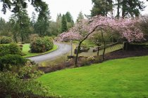 Цвіте навесні на дерева — стокове фото
