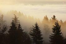 Happy Valley, Oregon — Photo de stock