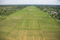 Рисові поля з дерева — стокове фото