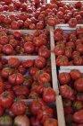 De tomates maduros en cajones; Calgary, Alberta, Canadá - foto de stock