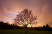 Arbre au coucher du soleil sur le terrain — Photo de stock