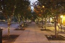 Luci sugli alberi In Piazza Jamison — Foto stock