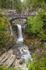 Mount Rainier Національний парк — стокове фото