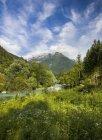 Зеленая долина с травой и деревьями — стоковое фото
