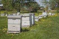 Вулики, виробництво меду — стокове фото