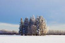 Gruppo di alberi nel campo — Foto stock