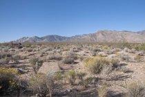 Montanhas do deserto de Mojave National Preserve — Fotografia de Stock
