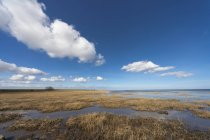 Вода с растениями и берега — стоковое фото
