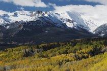 Gunnison national forest — Photo de stock