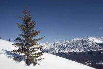 Árvore perene invernal ladeira — Fotografia de Stock