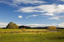 Prairie herbeuse avec arbres — Photo de stock