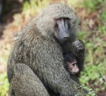 Monkey with it's baby — Stock Photo
