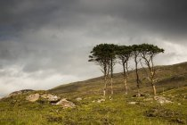 Small trees stand in rugged field — Stock Photo