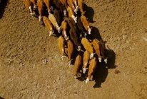 Rinder auf einer Weide — Stockfoto