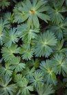 Nahaufnahme der Blätter an einer Pflanze — Stockfoto