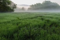 Niebla del balanceo sobre campo de la granja al amanecer - foto de stock