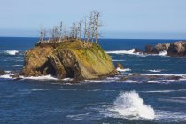 Rock formations at shore acres state park — Stock Photo