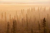 Lever du soleil au-dessus d'une forêt brumeuse — Photo de stock